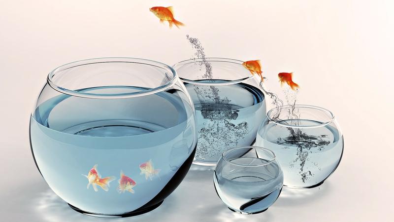 fish jump fish bowls 1920x1080 wallpaper_www.wallpaperhi.com_51