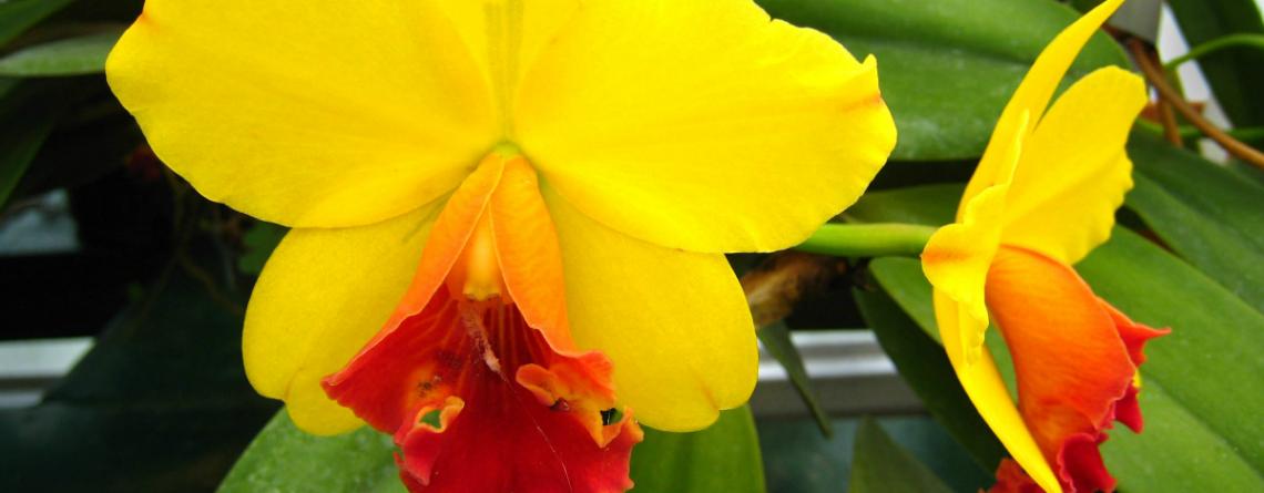 Articol 10 plante reconfortante pentru un aer mai curat în căminul tău - Tehnologie pentru viață