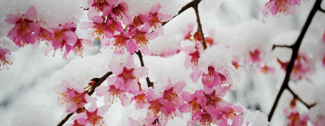 Articol Necazuri de primăvară şi  remedii din natură - Tehnologie pentru viață