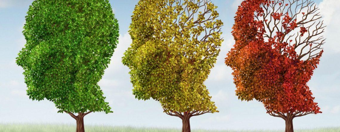 Articol 15 remedii naturiste pentru o memorie de geniu - Tehnologie pentru viață
