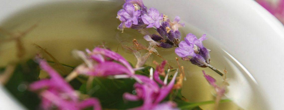 Articol 20 de plante care întăresc sistemul imunitar și te vindecă de boli - Tehnologie pentru viață