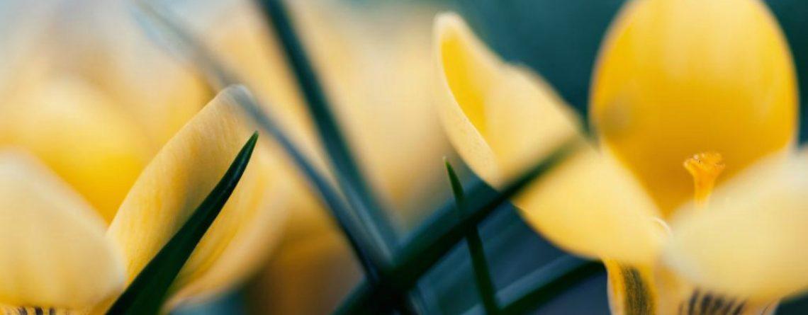 Articol Cele mai bune plante de martie pentru detoxifierea organismului - Tehnologie pentru viață