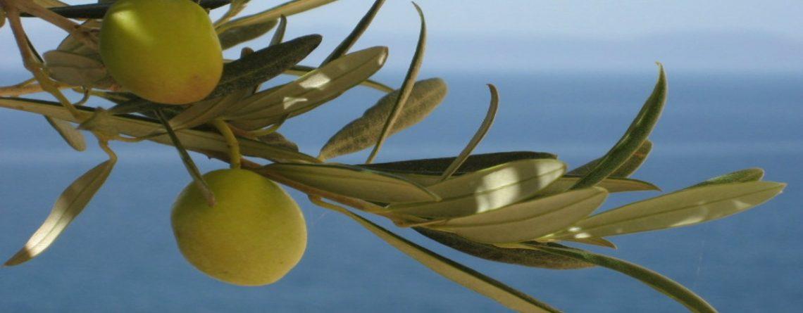Articol 4 secrete din insula Creta pentru o alimentație sănătoasă - Tehnologie pentru viață