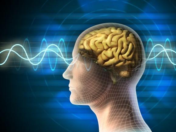 creier-activ