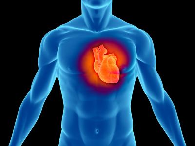 sistem-cardiovascular