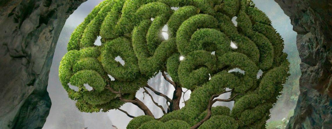 Articol Alimente vedeta care mentin creierul verde - Tehnologie pentru viață