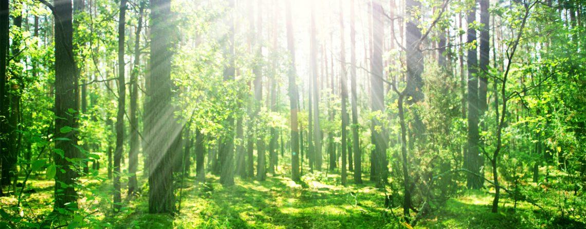 Articol Beneficiile conexiunii cu natura asupra sănătății fizice și mentale - Tehnologie pentru viață
