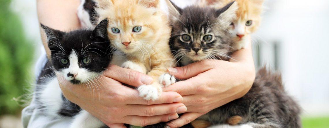 Articol 10 lecții de fericire: ce ai avea de învățat de la pisica ta - Tehnologie pentru viață