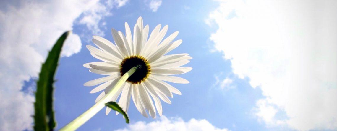 Articol Puterea stării de recunoștință - Tehnologie pentru viață